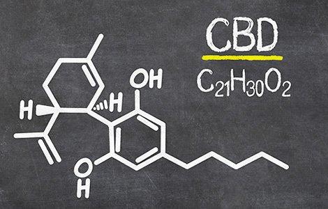 Hanf (Cannabis sativa) – neu entdeckt